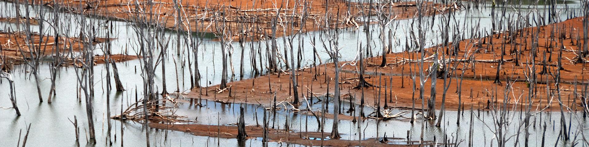 Submerged forest in the Blue River Park, New Caledonia
