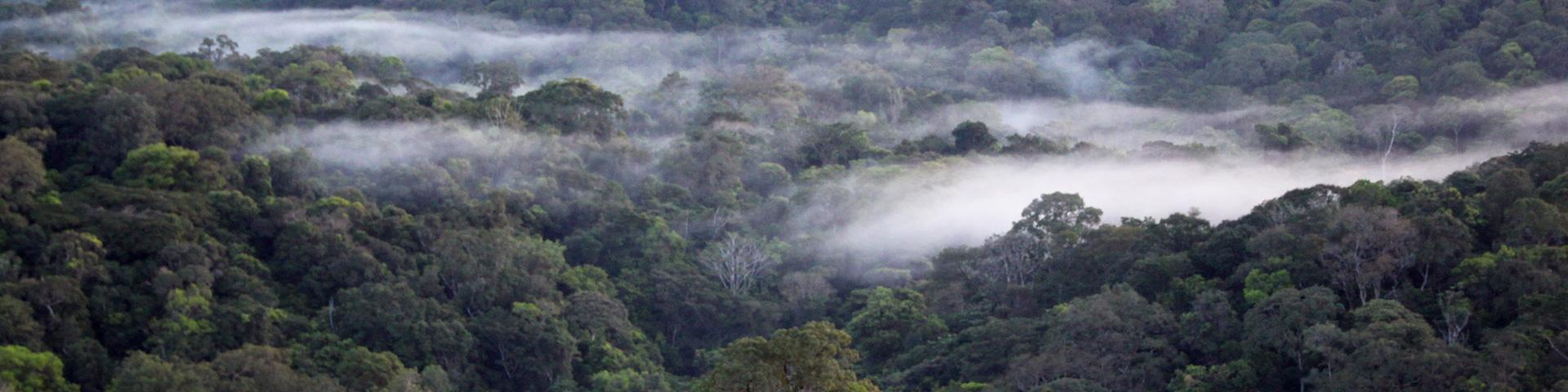 Amazon forest, French Guiana