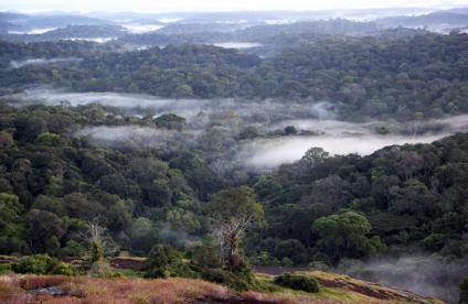 Amazonian forest of French Guiana
